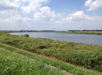 「木下河岸」(その2)。利根川水運の重要な港だった。今は面影も無いが・・・