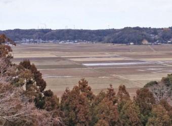 府馬の大楠から望む田園風景。利根川沿いの水田地帯は、かつて「香取の海」と呼ばれる内海だった。