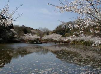 茂原公園は桜の名所。「日本桜の名所百選」に選ばれているほど。ぜひ一度は訪れたい。
