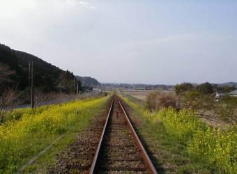 いすみ鉄道といえば菜の花。