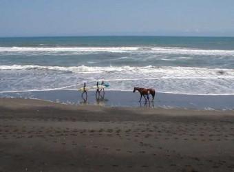一宮の東浪見海岸。サーファーもびっくり!でもどちらも気持ちよさそう。2002/09/12に撮影。