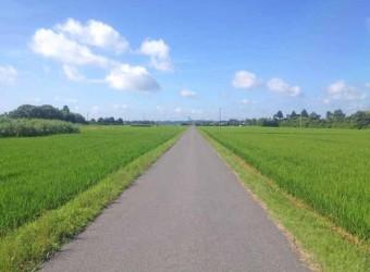 僕の家の目の前。田んぼの中にあるので、道も一直線。気持ち良い。