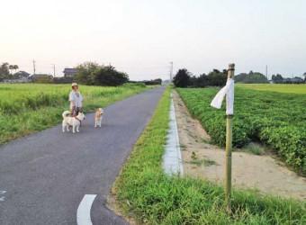 長生村のお盆。辻辻に竹飾りを建てて先祖の霊を導く。昔から続く伝統行事。