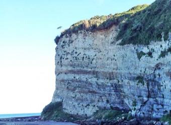 大原の断崖絶壁。砂岩と泥岩の互層がよく見える。典型的な四万十帯の地層。