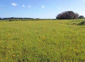 「成東・東金食中植物群落」。貴重な自然が数多く残っている。国指定天然記念物。