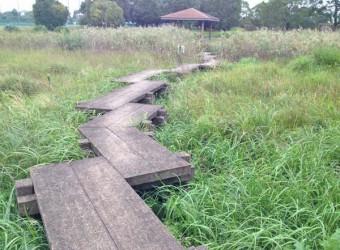 長生村の「尼が台公園」。貴重な湿性植物が残されている。かつてこの付近一帯は湿原地帯だった。